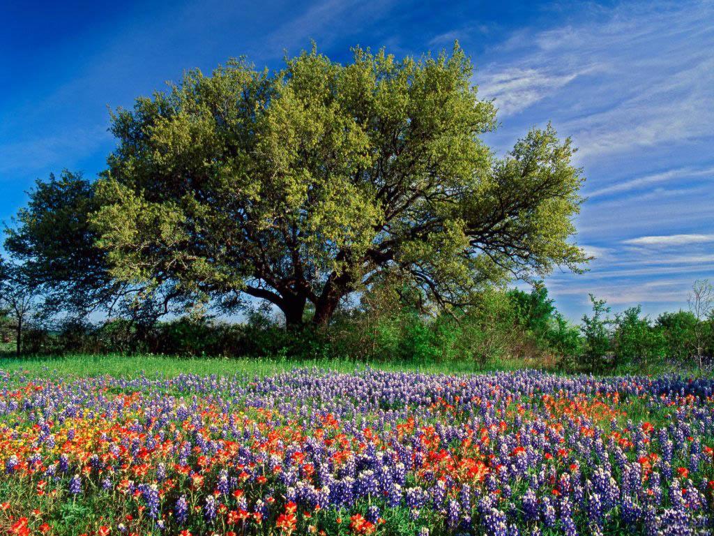 Manzara resmi ilkbahar manzaraları ilkbahar manzarası yorum yap