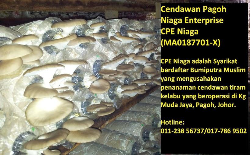 CPE Niaga Enterprise