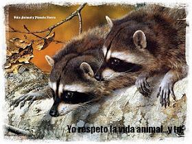 """Premio""""Yo respeto la vida animal"""""""