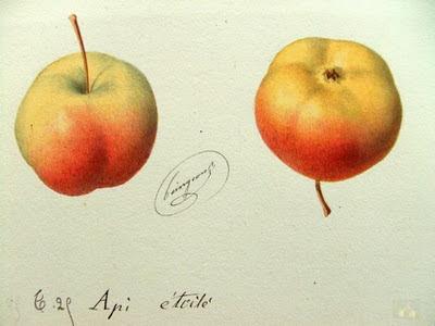 Cocotte au galop pomdarinet - Pomme de reinette et pomme d api tapis tapis rouge ...