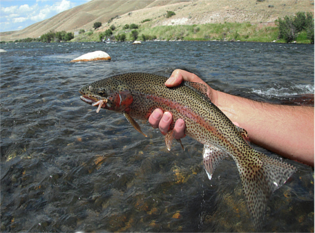 Fly fishing in yellowstone national park questionable for Fly fishing yellowstone river