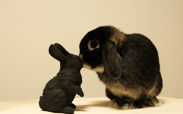 Cute Rabbit Love