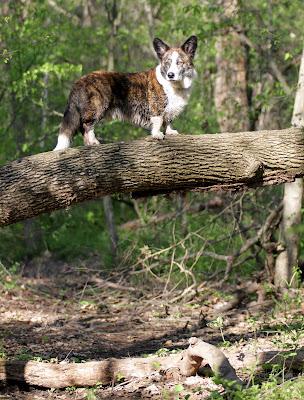 Wilson on a log