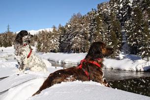 Cani e Natura: binomio perfetto