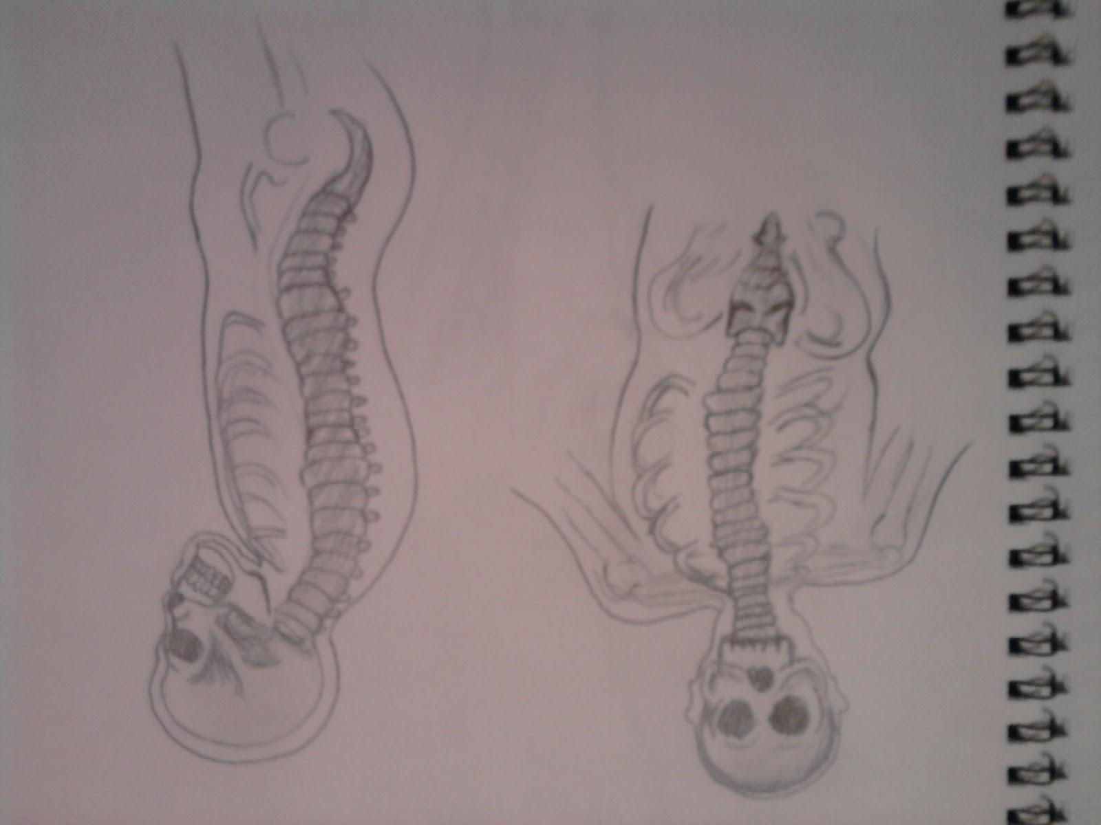 tema: Anatomía en el arte ST 7701: estructura osea del cuerpo humano