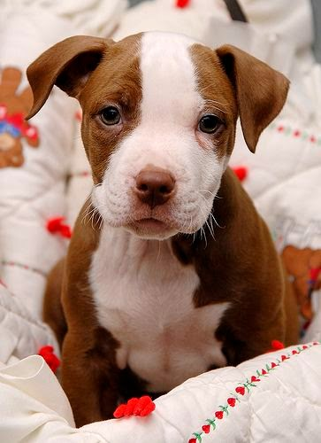 Top 5 Most Lovable Dogs Breed