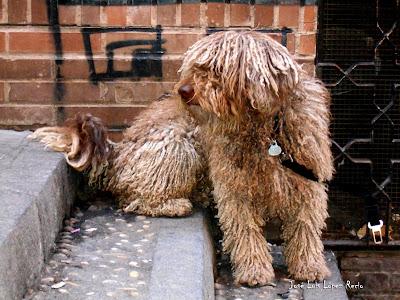 quotes, reflexiones, Como un perro atado a la espera de algo, vida, destino, temor, José Luis López Recio, joselop44, sueños. destino,