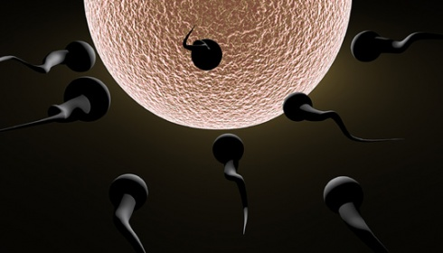 Apakah Bisa Hamil,Bila Cairan Sperma Keluar Lagi dari Kelamin Istri ?