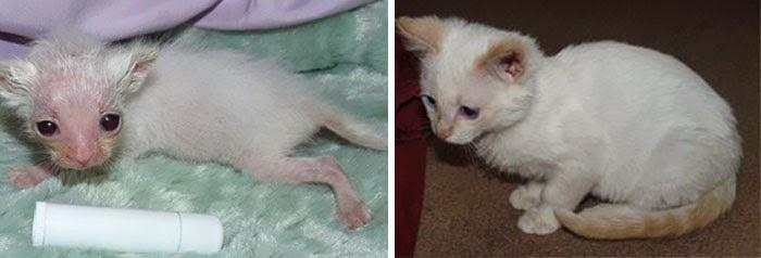 πριν και μετά διάσωση γατάκια