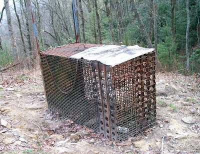 poaching, operation bruin, wildlife, ga, north ccarolina, game and fish, dnr, arrests