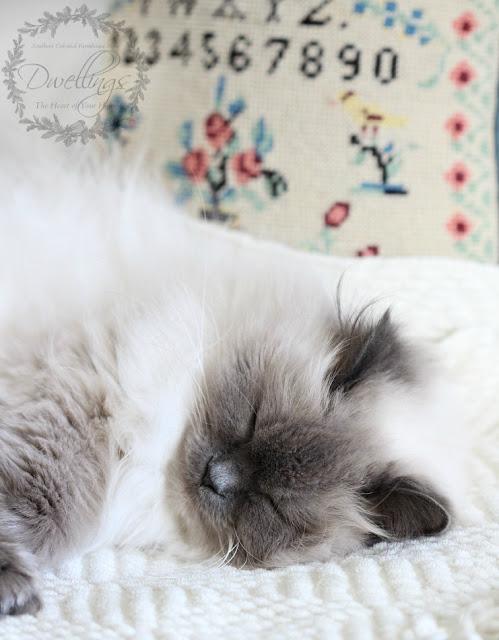 Bella kitty taking a cat nap.