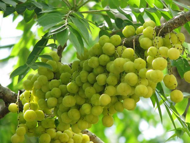 desktop bangladesh fruits pictures - photo #21