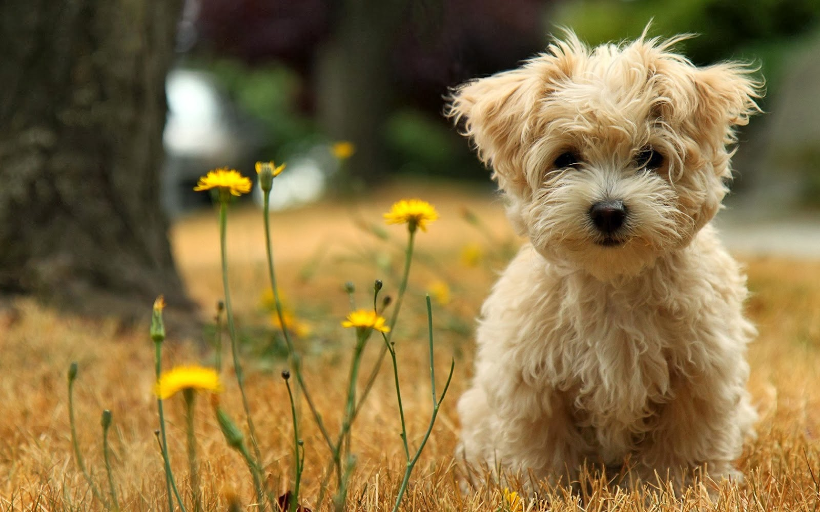 Puppies Hd Wallpapers Hd Wallpapers Blog HD Wallpapers Download Free Images Wallpaper [1000image.com]