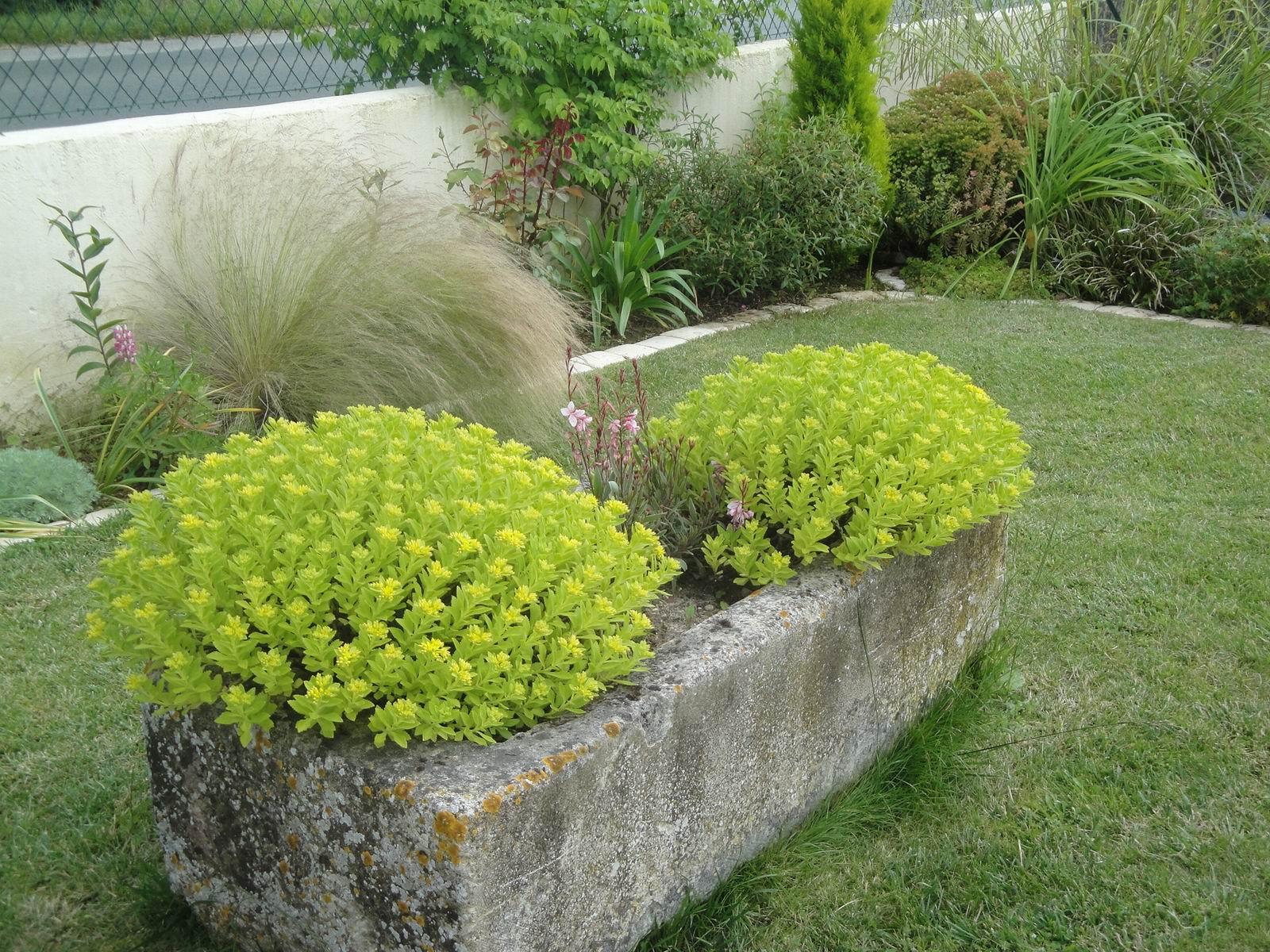 Cocoon Garden: Commande Promesse de Fleurs...