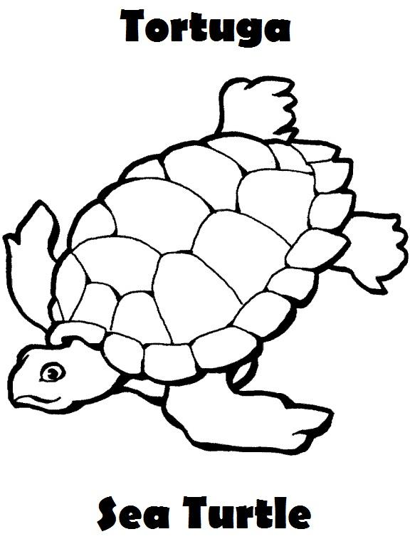 Animalitos marinos parte 2 | Imagenes para dibujar | Dibujos para ...