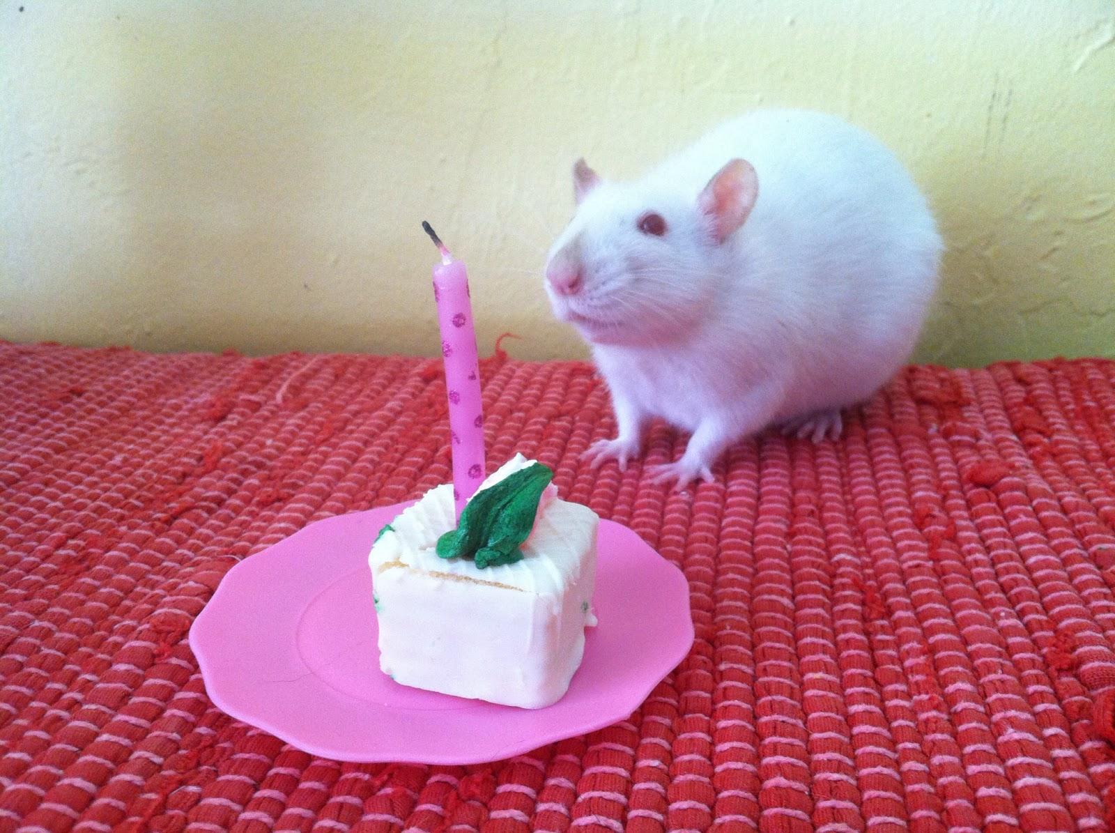 Happy Birthday Dana, 25 years old Chelsea+1