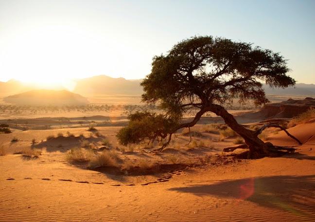 Namib Dune Cabins Namibia