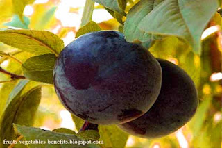 benefits_of_eating_plums_fruits-vegetables-benefits.blogspot.com(benefits_of_eating_plums_6)