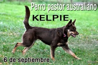 Serie perros pastores