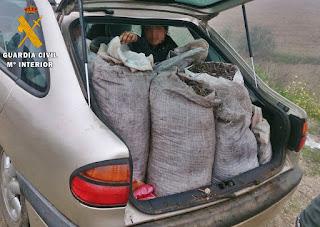 Coche con sacos de aceitunas incautados.