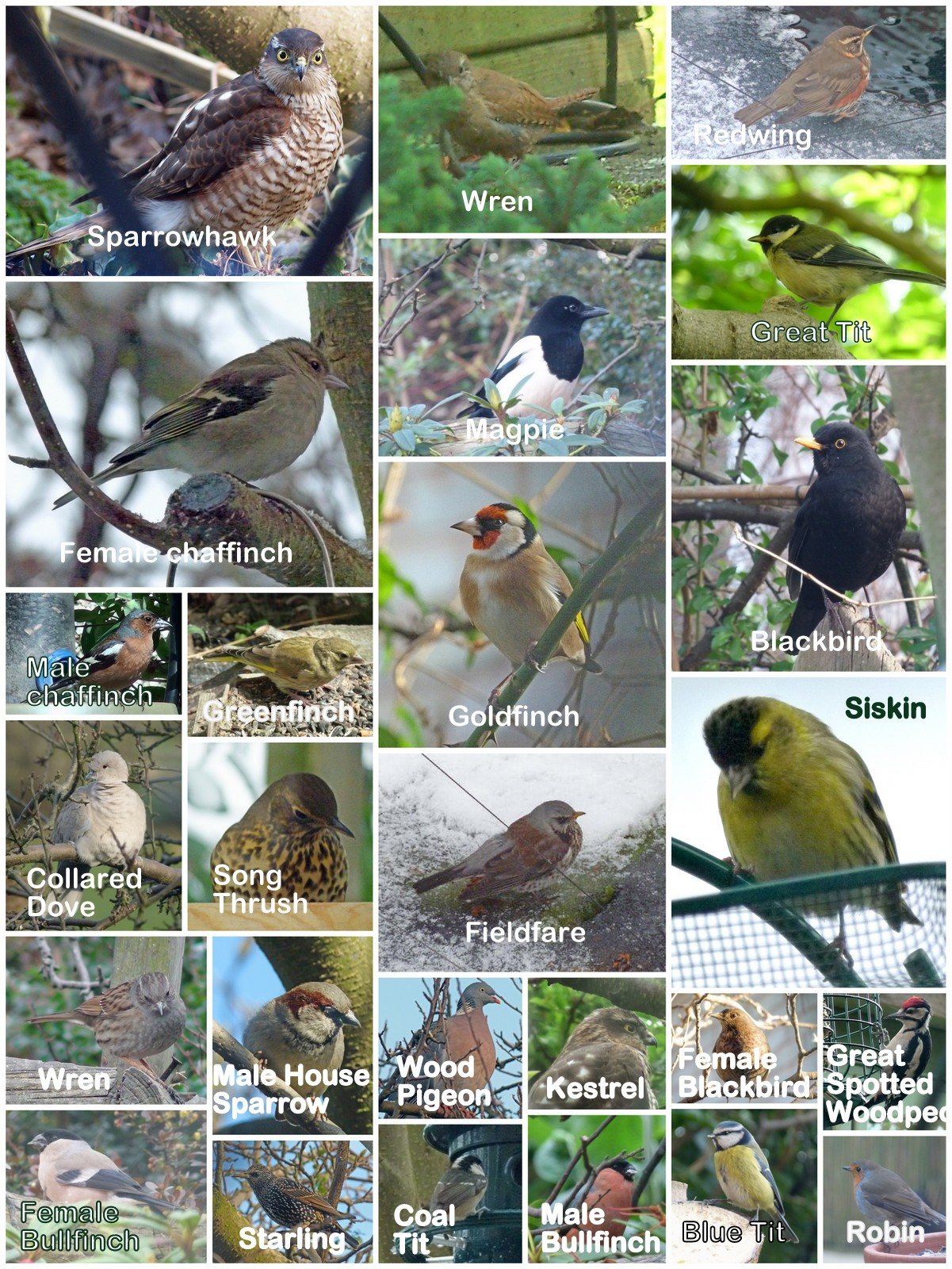 Learn to identify your garden birds
