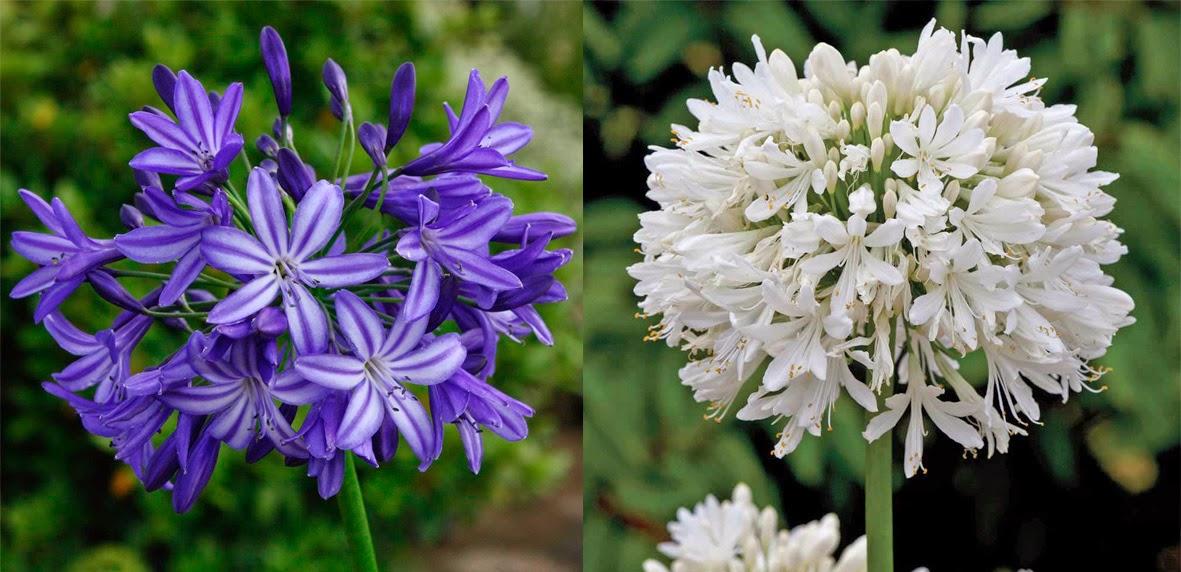 Producción y Decoración de Eventos: Flores y sus Temporadas