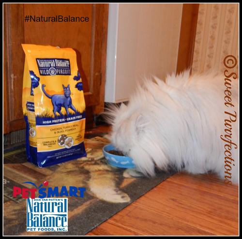 Brulee enjoying her bowl of #NaturalBalance Wild Pursuit