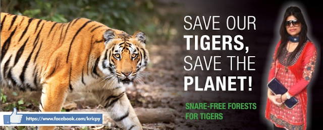 Kricpy - Save Tigers