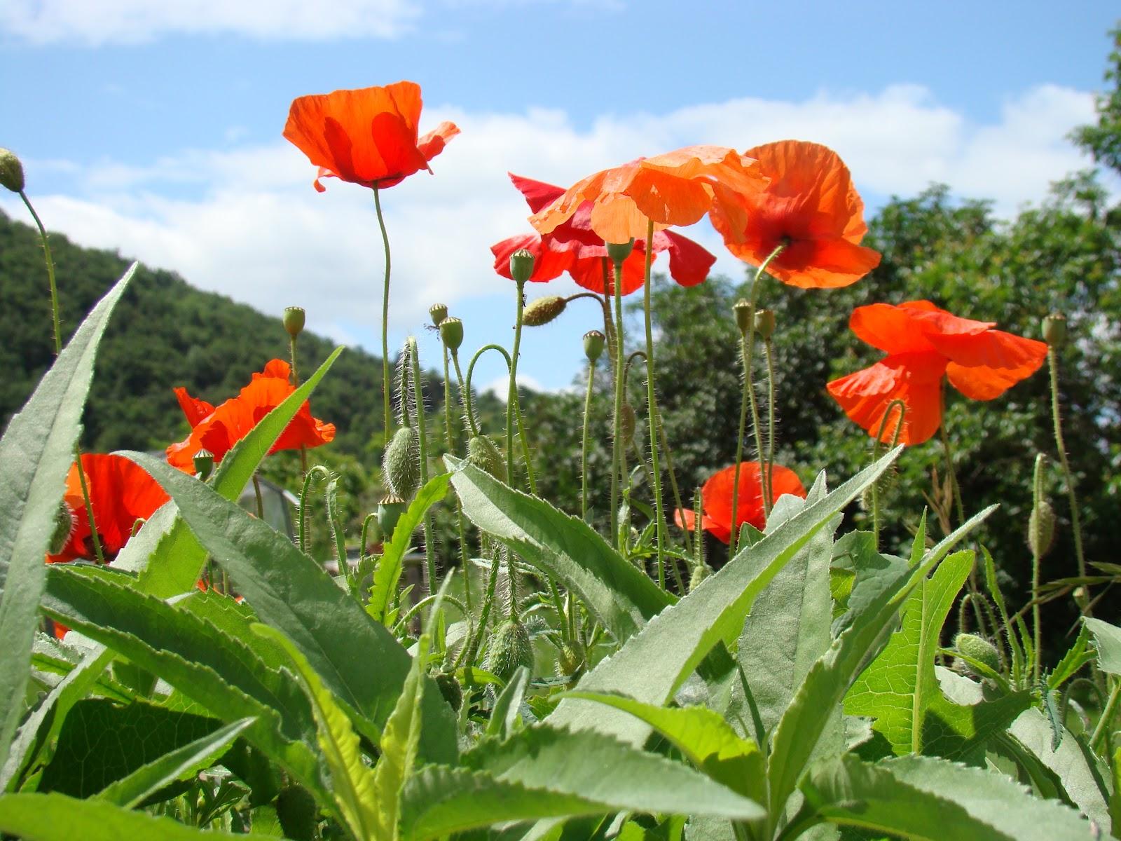 Le jardin d 39 aubeyrat encore de nouvelles fleurs for Jardin encore