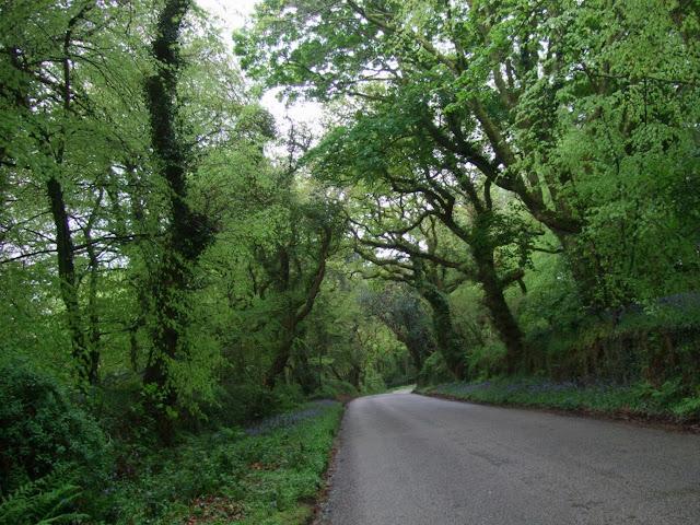 Cornish country lane