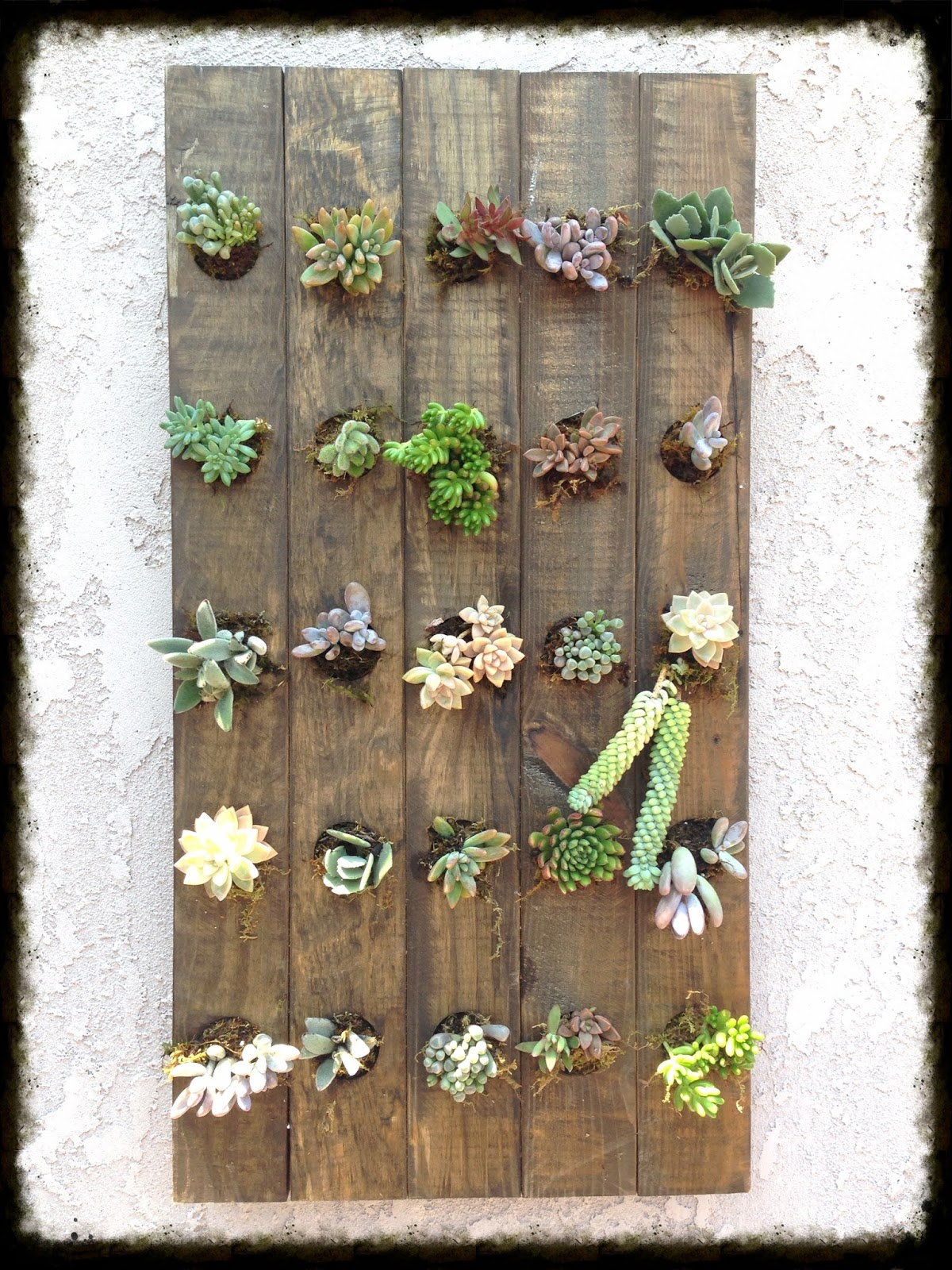 Hanging Wall Garden Diy : Garden and bliss diy succulent vertical