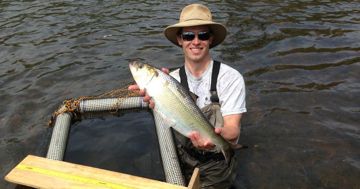 shad fishing delaware river lambertville