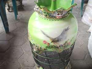 sangkar burung perkutut