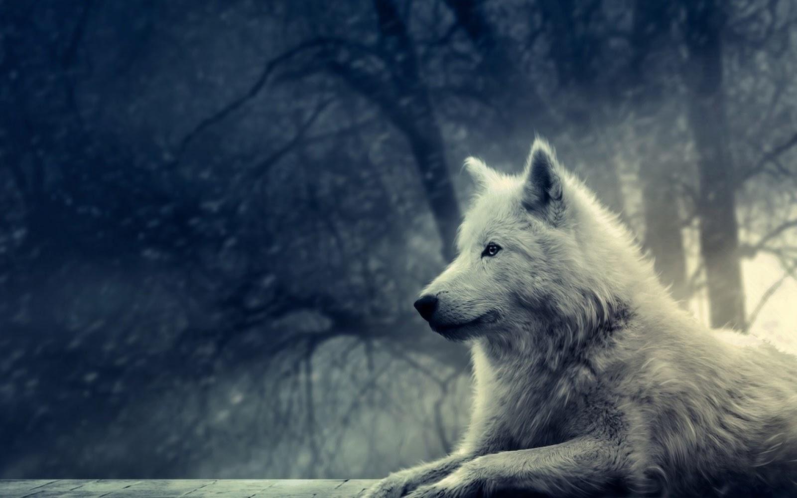 El lobo blanco.