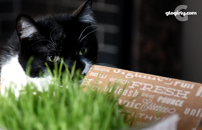 Katie Cat opening box of cat grass