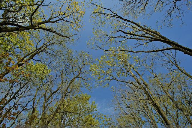Robbenoordbos - Robbenoord forest