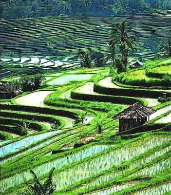 indonesiaku: bali landscape view, sawah