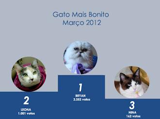 PÓDIO DO GATO MAIS BONITO DE MARÇO DE 2012