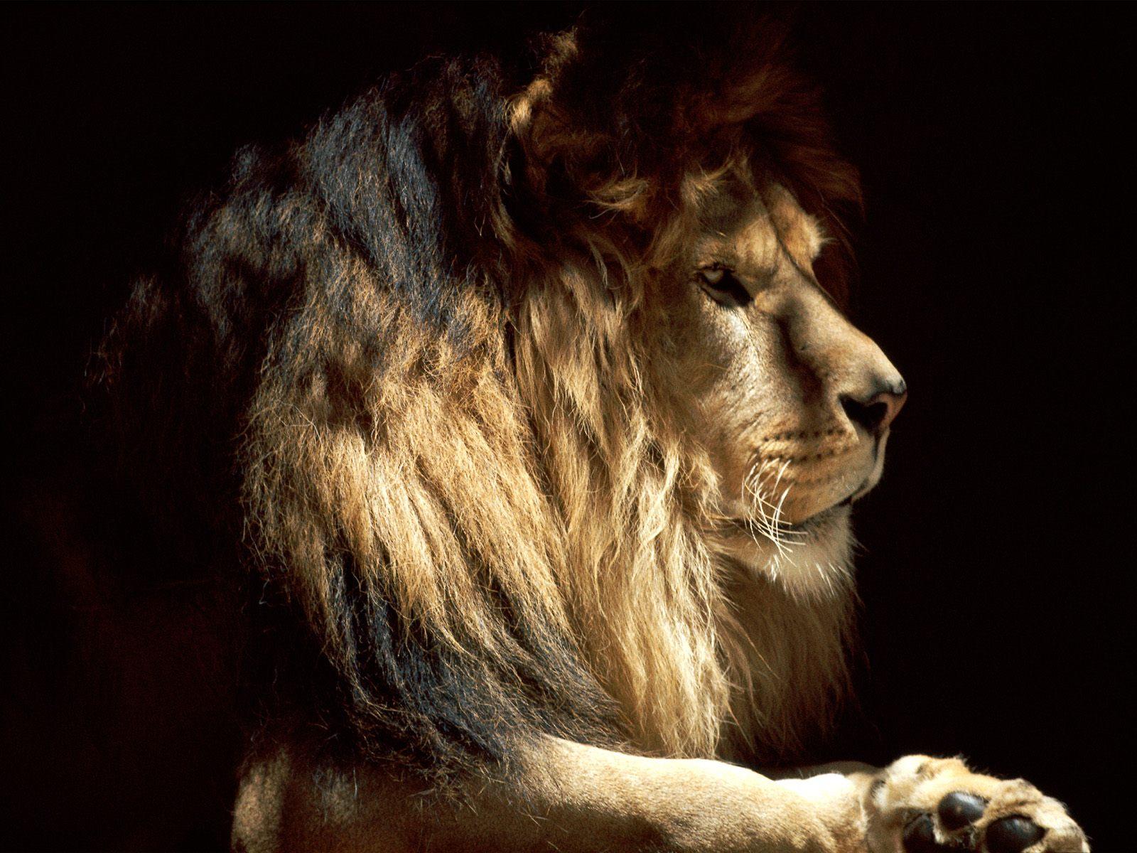 http://2.bp.blogspot.com/-MZIPUTlKT5A/TqS5TgH3a5I/AAAAAAAABpE/hBrwdW_q1GM/s1600/animal_0126.jpg