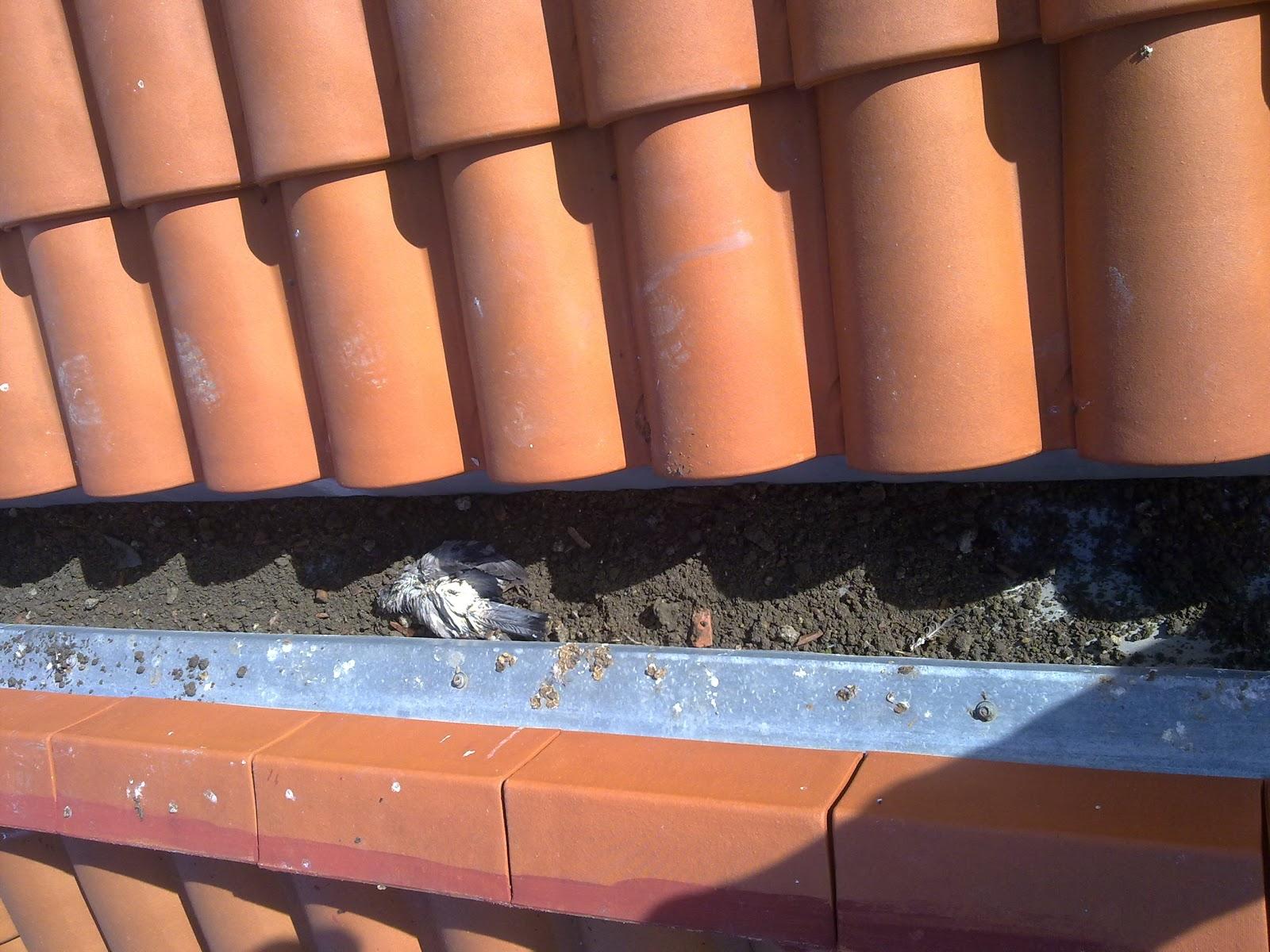 Los canalones reparar y limpiar canalones madrid - Fotos de canalones ...
