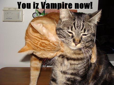 Pisica vampir