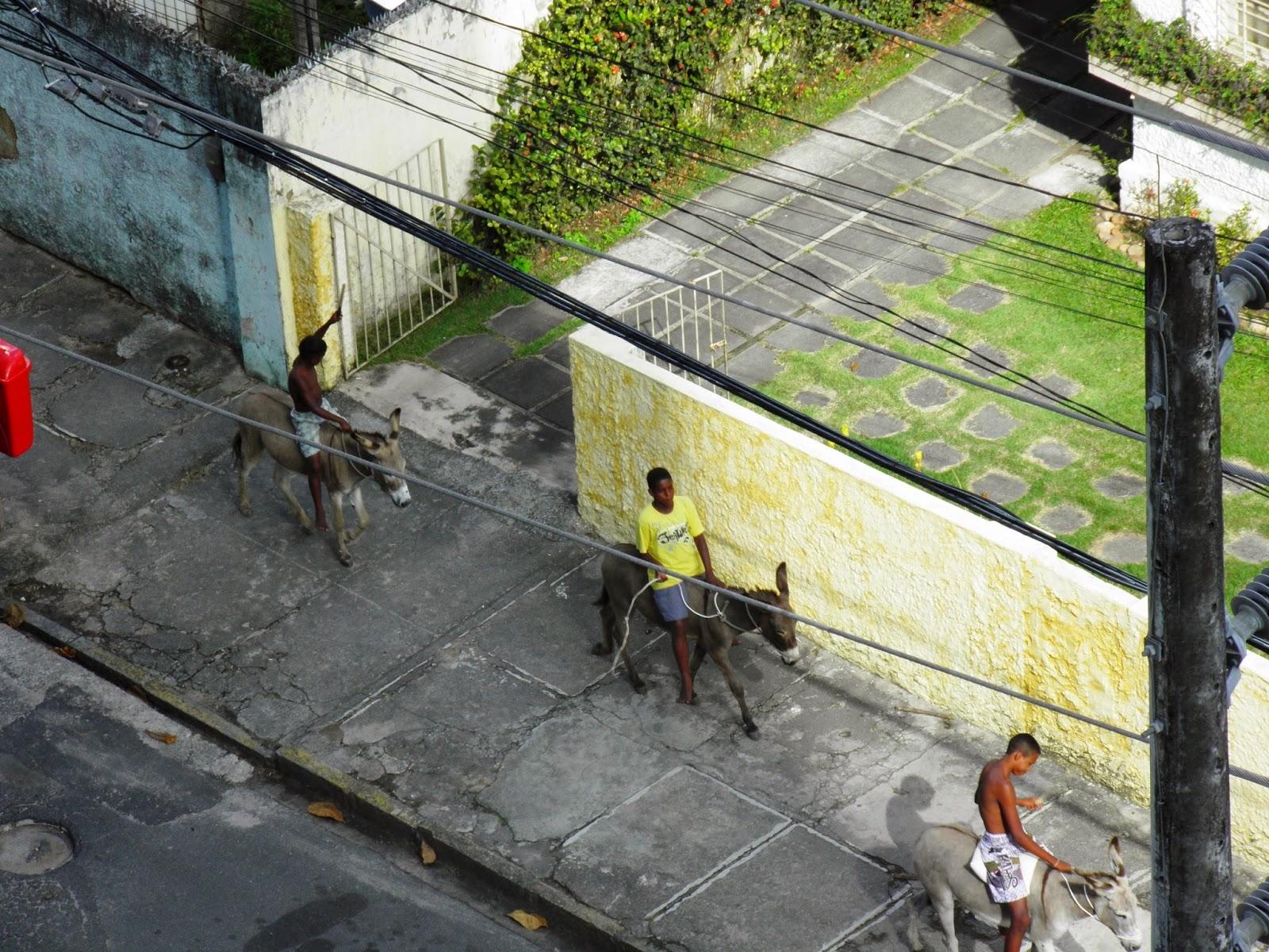 ANIMAIS E MEIOS DE TRANSPORTE; USO INDEVIDO DE ANIMAIS; ANIMAIS DE TRAÇÃO;