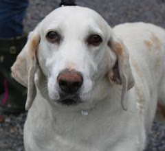 11/11/12 Dogs on Sale! Beau Costs $75.00. Augusta Dog Adoptions. Virginia