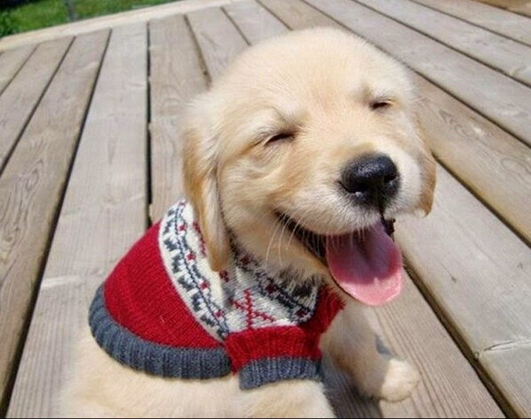 Smiley Golden Retriever Puppy