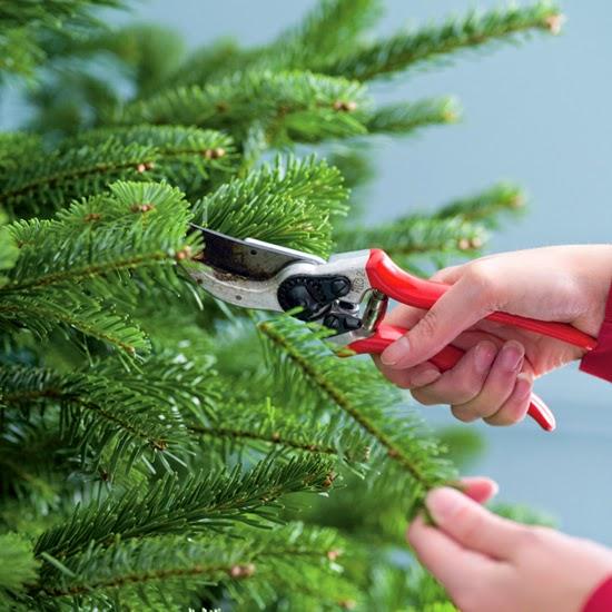 HOW DO YOU STOP A CHRISTMAS TREE FROM GROWING?  The Garden of Eaden