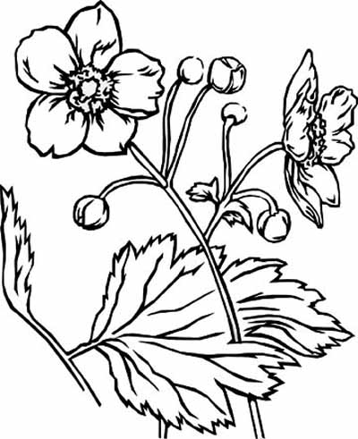 coloring pages of flowers and hearts. coloring pages for adults.