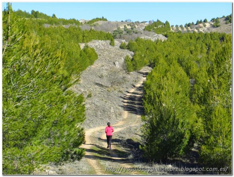 corriendo entre pinos verdes