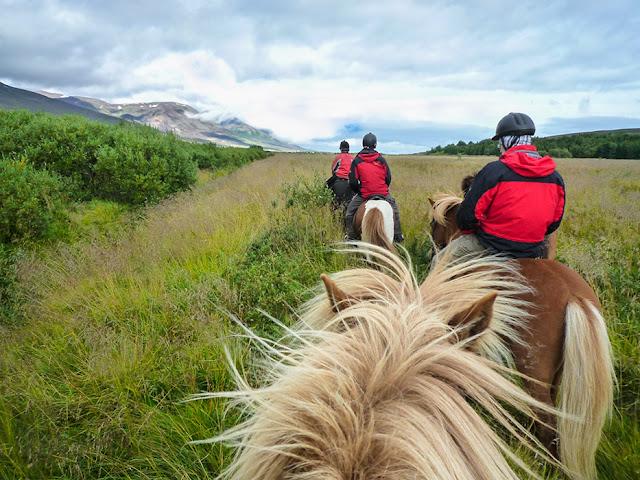 Kuc islandzki - Kartki z podróży