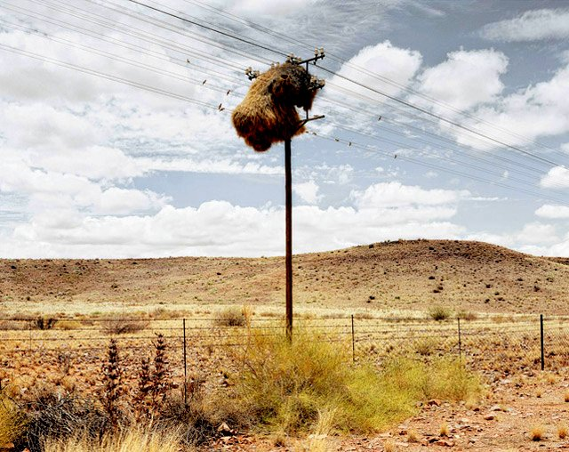 The Flying Tortoise: The Sociable Weaver Birds Take Over ...