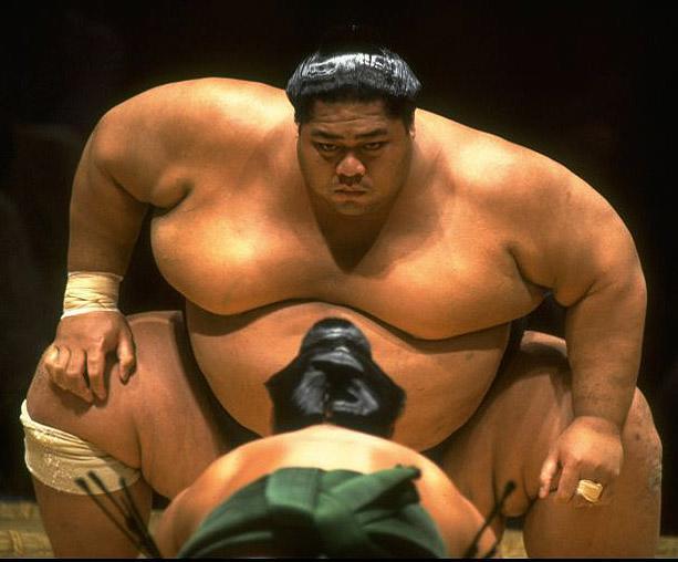 sumo Fat gay